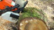 Stock Video Footage of Chainsaw Cutting Wood