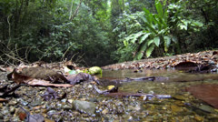 P02708 Ground Level View of Jungle Stream Stock Footage