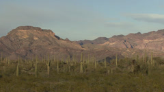 P02711 Saguaro Cactus in Southwest Desert Stock Footage