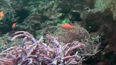 Tropical Underwater Sea Animals- Fish Stock Footage