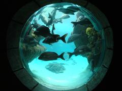 Underwater Porthole -Fish Tank - stock photo