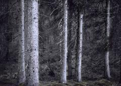 Forest at night Stock Photos