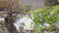Pan Dai Temple Taian China Chinese bonsai trees garden purple flowers Stock Footage