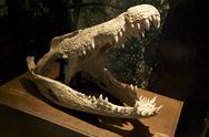 Stock Photo of Croc Jaws