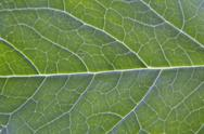 Stock Photo of Leafy Green