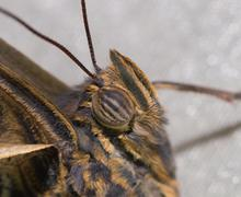 portrait of a butterfly, macro - stock photo