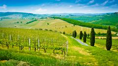 Vineyard hills and cypresses Stock Photos
