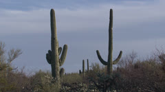 P02744 Saguaro Cactus National Park in Arizona Stock Footage