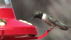 P02760 Hummingbirds at Bird Feeder Stock Footage