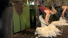 Shearing gang shearing merino sheep Stock Footage