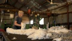 Rousabout throwing a fleece of wool Stock Footage