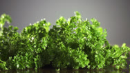Parsley with knife on wooden cutting board. Macro with shallow dof. Stock Footage