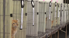 Cat Show in Pasadena California Brings out Prize Winning Feline Animal Pets Stock Footage