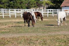 Herd of horses in corral farm scene Stock Photos