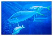 Stock Photo of Fish in Blue Water