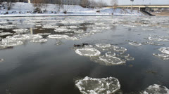 Two ducks swim to each other against stream pieces of frozen ice Stock Footage