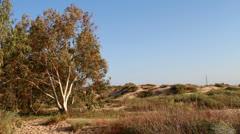 Eucalyptus Stock Footage