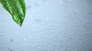 Stock Video Footage of Raindrops on water and running off green leaf
