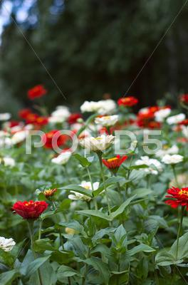 Stock photo of flowerbed
