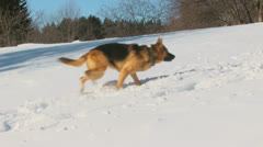Dog in winter country Stock Footage