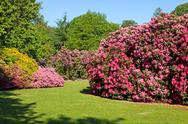 Stock Photo of rhododendron and azalea bushes in beautiful summer garden