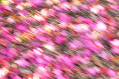 Abstract background soft focus flower petals brightly coloured Stock Illustration