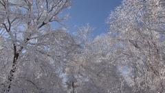 SNOW-COVERED TREES #7 - stock footage