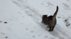 Feral Stretch in the Snow - stock footage