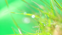 Dewdrop on grass Stock Footage