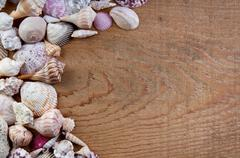 sea shells on a wooden background - stock photo