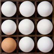 Diversity eggs, white and brown eggs in a printers drawer Stock Photos