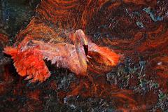 flamingo rust - stock photo