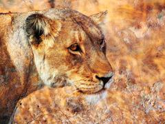 rusty lioness - stock photo