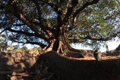 Australian tree Stock Photos