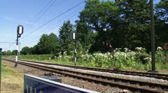 Giant Hogweed in bloom along railway track, bells ring, train passes 03 Stock Footage