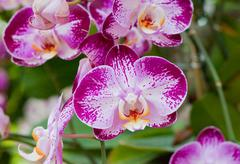 beautiful orchid - stock photo