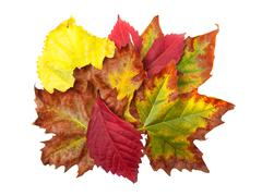 fall bouquet - stock photo