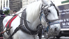 Central Park Horse Carriage- Slow Motion 1 Stock Footage