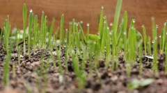 Fresh grass after rain Stock Footage