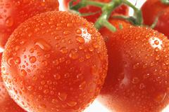 the dewy tomato - stock photo