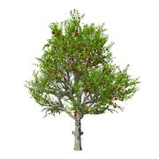 Apple tree isolated. Vector illustration Stock Illustration