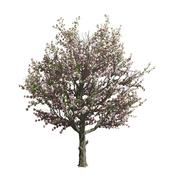 Apple tree isolated. Vector illustration - stock illustration