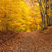 fall forest trail - stock photo