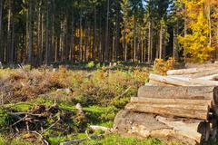 clearcut timber and logpile - stock photo