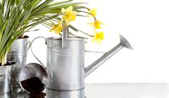 Daffodil and watercan still life Stock Photos