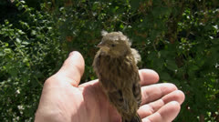 Little wild bird in the hands of human Stock Footage