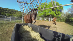 Horse Feeding Stock Footage