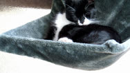 Black and white cat Stock Footage