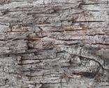 Stock Photo of old tree bark background