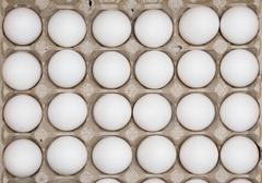 two dozen eggs - stock photo